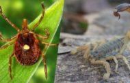 Vigilância em Saúde de Ubatuba alerta para cuidados a tomar com carrapatos e escorpiões