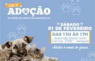 Prefeitura de São Sebastião promove feira com 80 cães e gatos para adoção