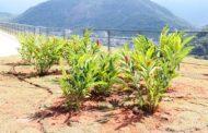 Complexo Turístico do Camaroeiro recebe paisagismo tropical e plantio de 318 árvores floríferas e frutíferas nativas